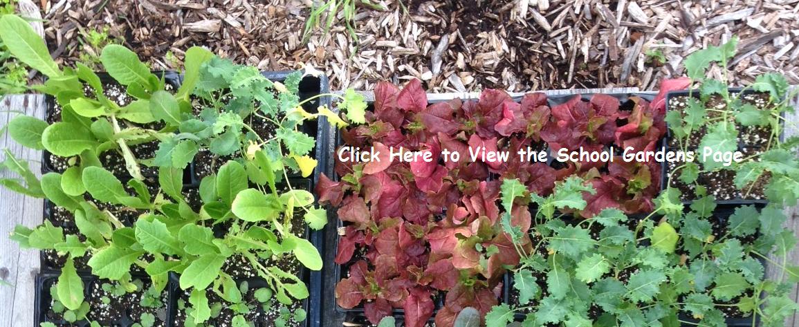School Gardens Page