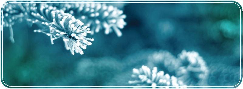 winter_branches.jpg